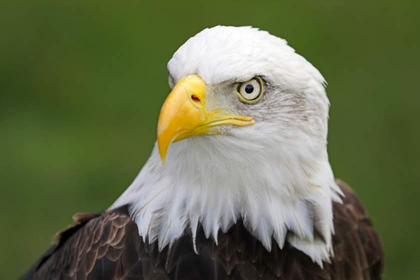 Почему в голливудских фильмах нет американских птиц